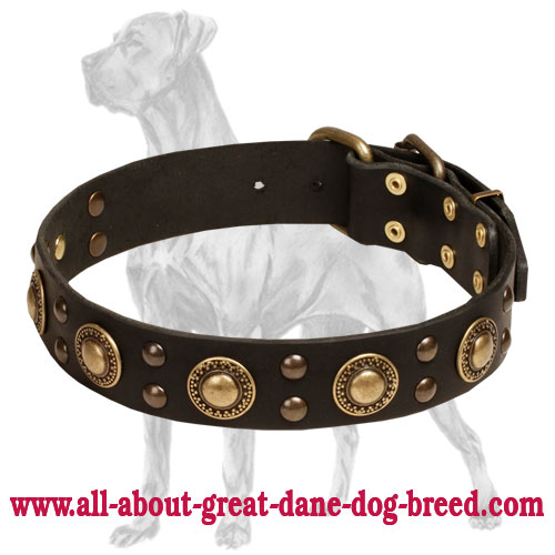 Stylish Great Dane collar adorned with vintage  decorations