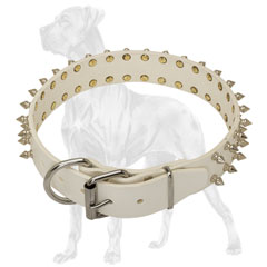 High-grade Great Dane collar with nickel plated fittings