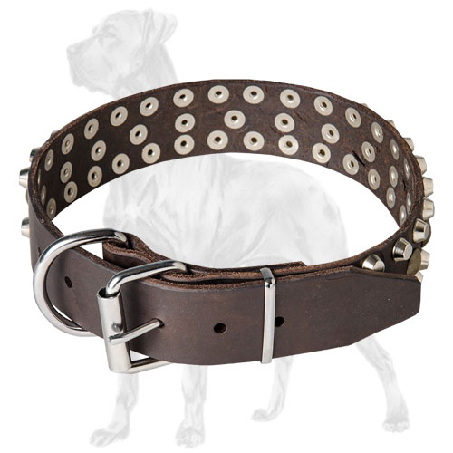 Strong collar for Great Dane with nickel fittings