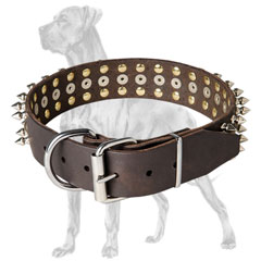 Quality Great Dane collar with nickel hardware