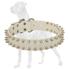 Chic Great Dane collar with nickel plated spikes