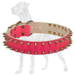 Trendy pink Great Dane collar with nickel spikes