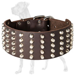 Trendy Great Dane collar with nickel plated studs