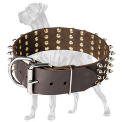 Leather Great Dane collar with reliable fittings