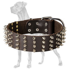 Trendy Great Dane collar with nickel spikes
