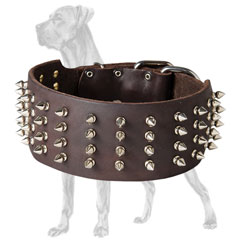 Great Dane collar with spikes