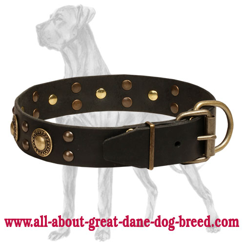 Deluxe Great Dane collar with brass plated hardware