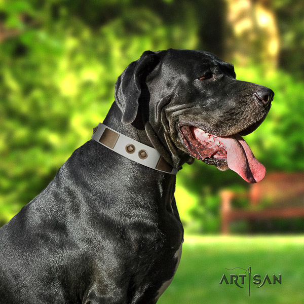 Great Dane everyday use natural leather collar with embellishments for your four-legged friend