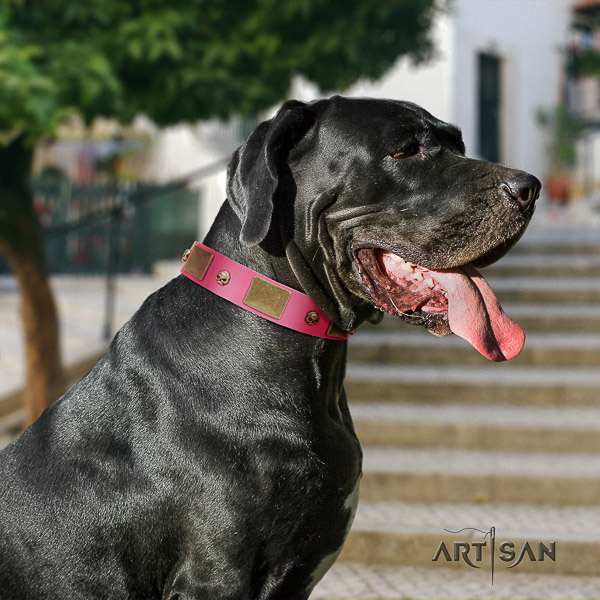 Great Dane stylish walking full grain natural leather collar with studs for your doggie
