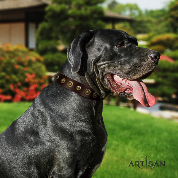 Great Dane walking full grain natural leather collar with embellishments for your dog