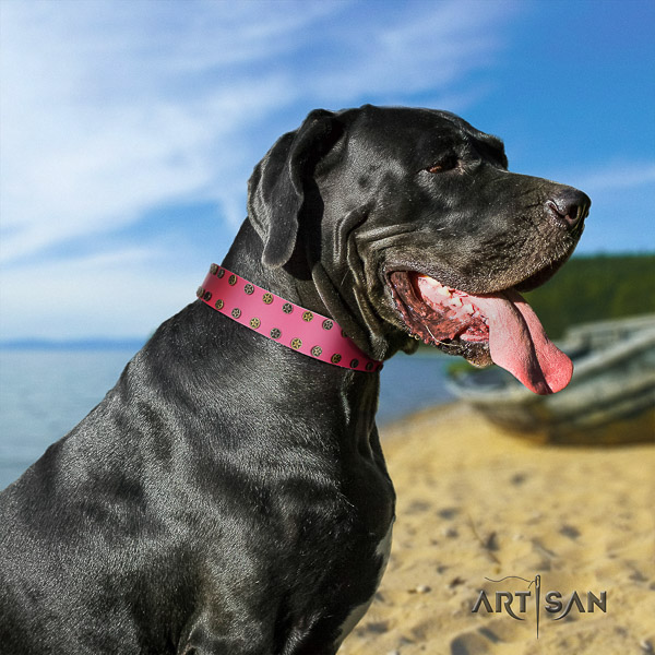 Great Dane everyday walking genuine leather collar with studs for your four-legged friend