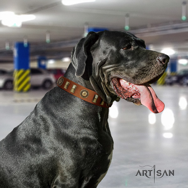 Great Dane comfy wearing full grain genuine leather collar with embellishments for your pet