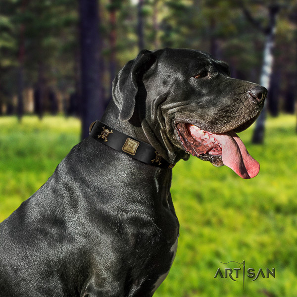 Great Dane fancy walking full grain natural leather collar with studs for your dog