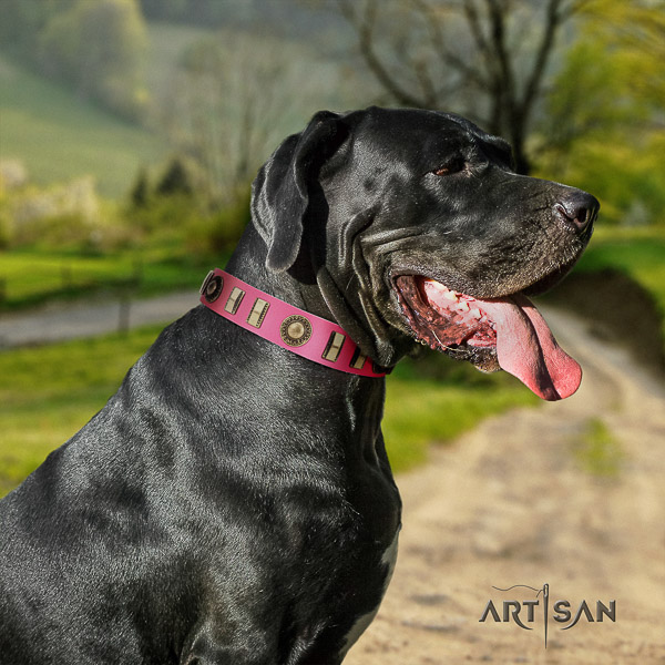 Great Dane fancy walking full grain leather collar with studs for your four-legged friend