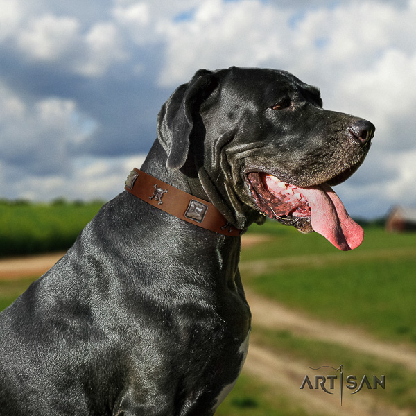 Great Dane fancy walking genuine leather collar with decorations for your canine