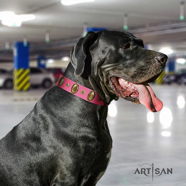 Great Dane easy wearing genuine leather collar with embellishments for your four-legged friend