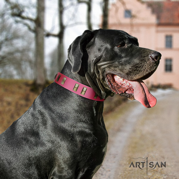 Great Dane daily use full grain natural leather collar with embellishments for your canine