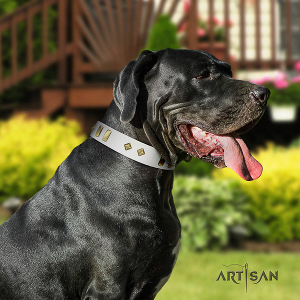 Great Dane walking natural leather collar with adornments for your canine