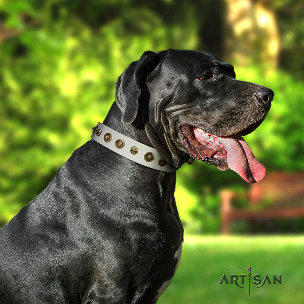 Great Dane handy use leather collar with embellishments for your pet