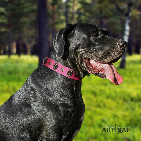Great Dane daily use full grain natural leather collar with studs for your canine