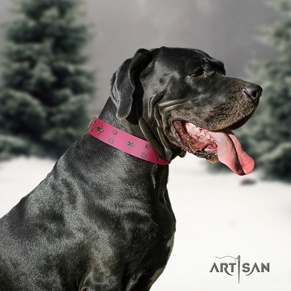 Great Dane comfortable wearing genuine leather collar with adornments for your doggie