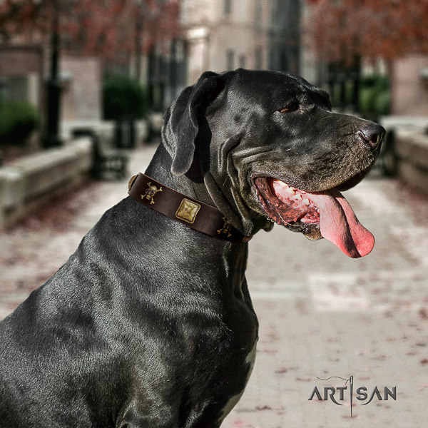 Great Dane daily walking full grain natural leather collar with adornments for your dog