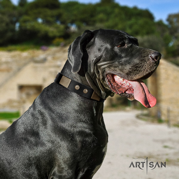 Great Dane everyday use full grain natural leather collar for your attractive dog