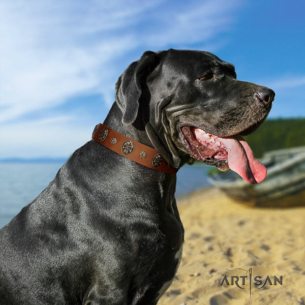 Great Dane walking natural leather collar with adornments for your four-legged friend