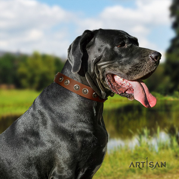 Great Dane basic training full grain natural leather collar with studs for your doggie