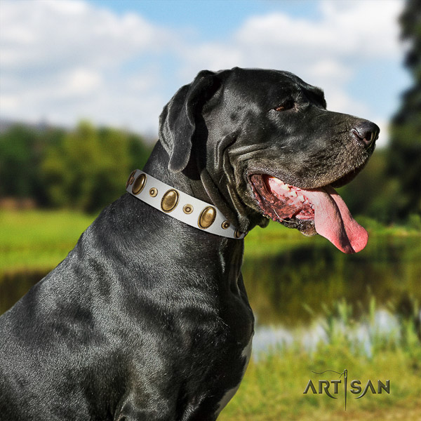 Great Dane stylish walking full grain genuine leather collar with studs for your doggie