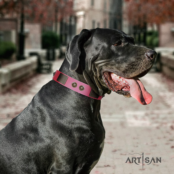 Great Dane easy wearing full grain leather collar with embellishments for your pet