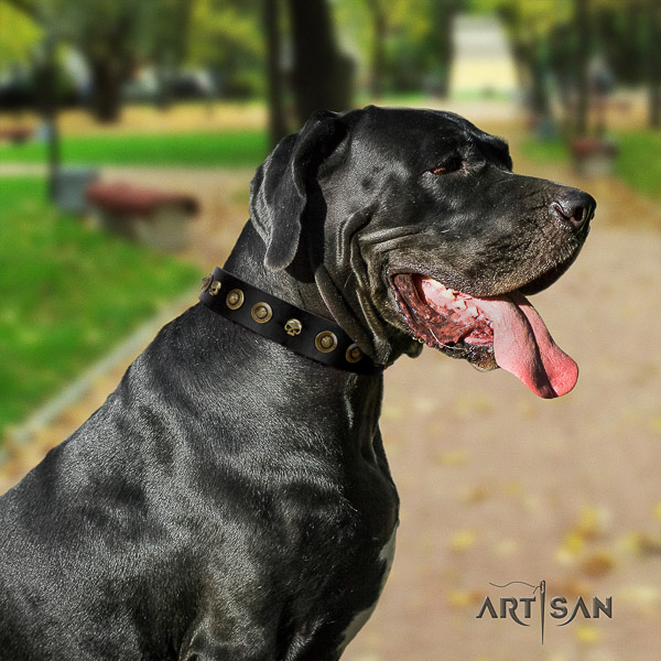 Great Dane daily walking genuine leather collar with embellishments for your pet