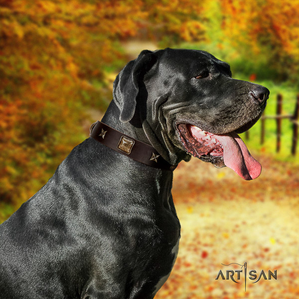 Great Dane daily use genuine leather collar with adornments for your canine