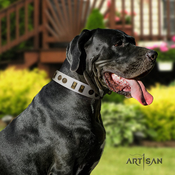 Great Dane perfect fit collar with significant adornments for your doggie