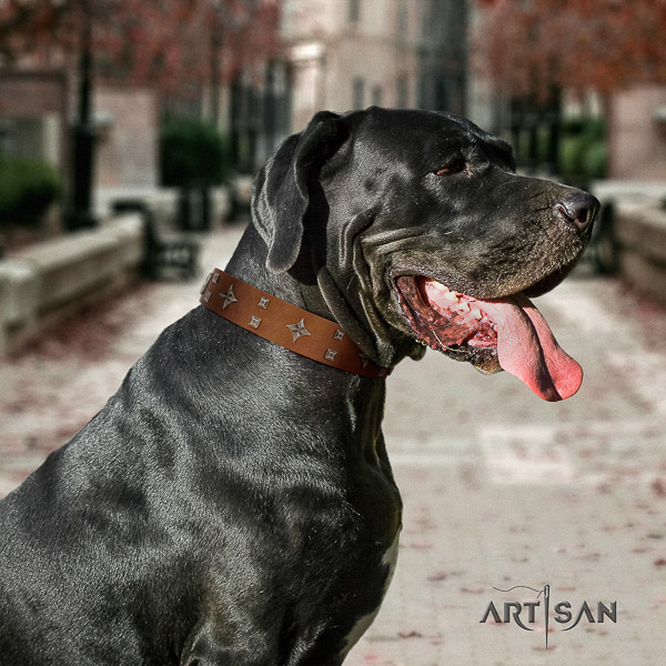 Great Dane walking natural leather collar with adornments for your doggie