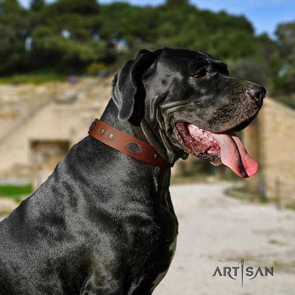 Great Dane perfect fit collar with stylish adornments for your doggie