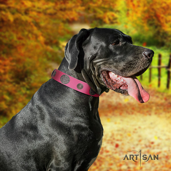 Great Dane daily walking full grain genuine leather collar with decorations for your four-legged friend