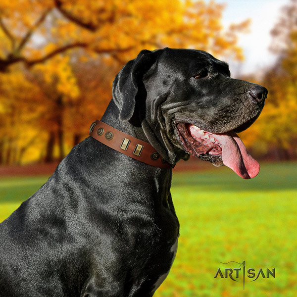 Great Dane easy to adjust collar with trendy embellishments for your pet