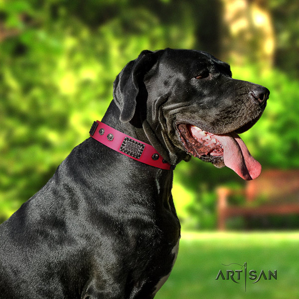 Great Dane best quality collar with incredible decorations for your pet