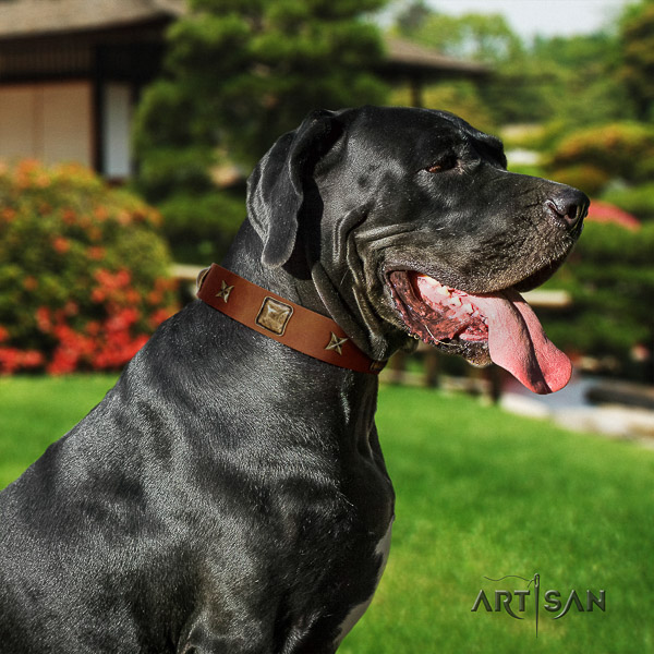Great Dane stylish walking natural leather collar with adornments for your pet