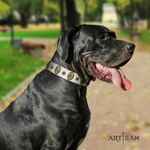 Great Dane comfortable wearing full grain genuine leather collar with embellishments for your dog