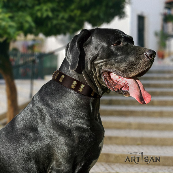 Great Dane walking leather collar with studs for your four-legged friend
