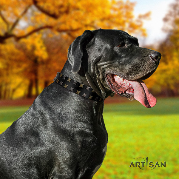 Great Dane everyday use full grain leather collar with adornments for your canine
