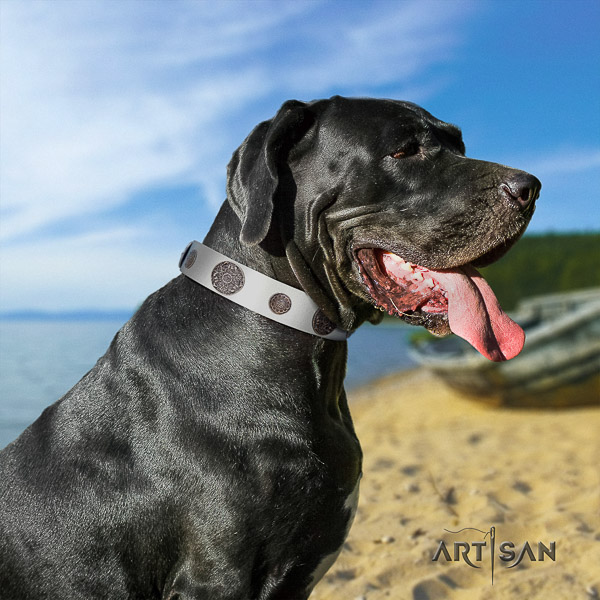 Great Dane fancy walking natural leather collar with studs for your canine