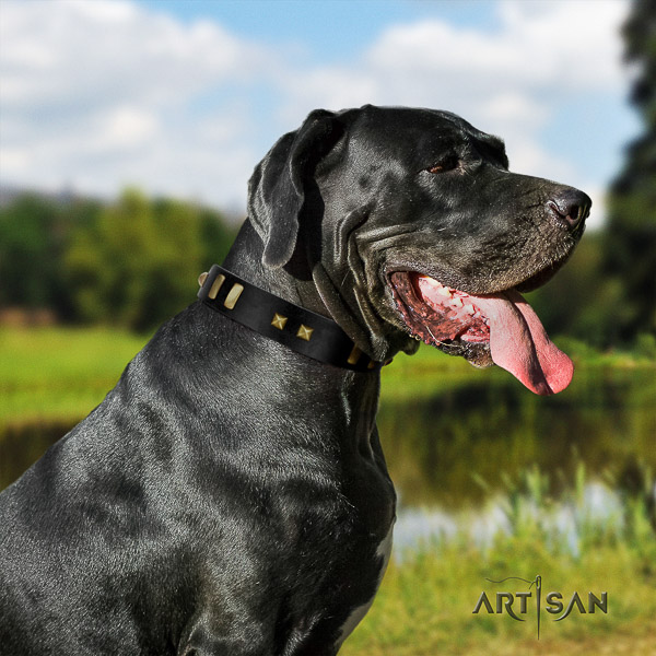 Great Dane basic training full grain natural leather collar with decorations for your canine