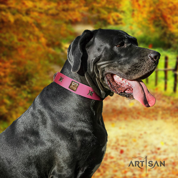 Great Dane daily walking full grain leather collar with decorations for your canine
