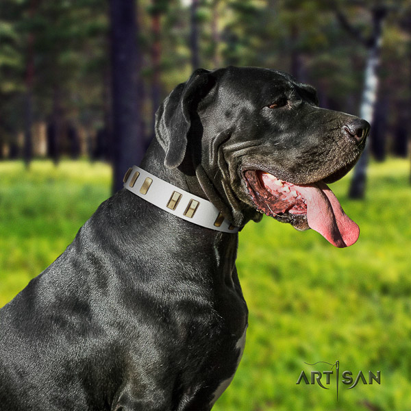 Great Dane fancy walking leather collar with embellishments for your dog