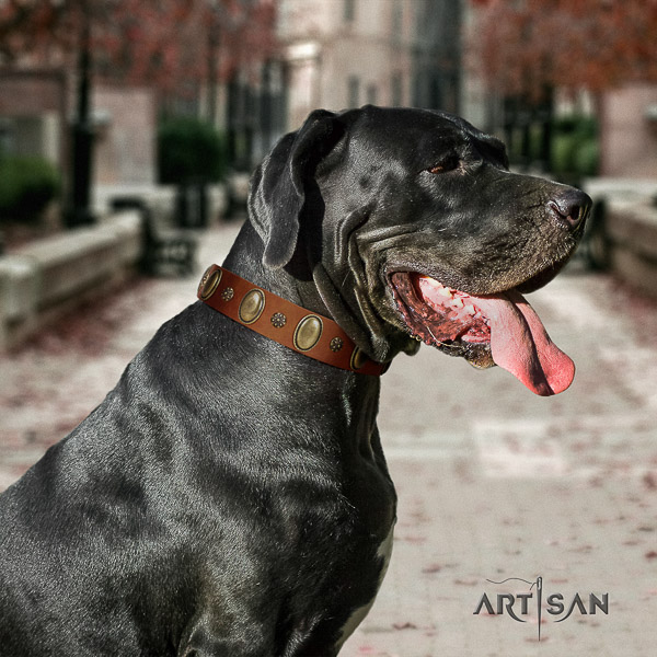 Great Dane basic training full grain natural leather collar with studs for your pet