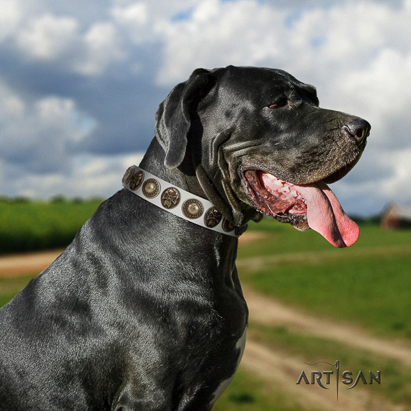 Great Dane daily use genuine leather collar for your stylish pet