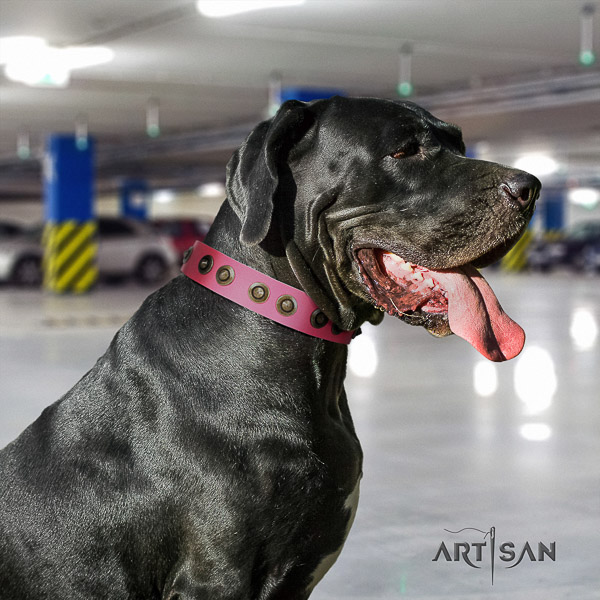 Great Dane comfortable wearing natural leather collar with embellishments for your doggie